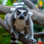 "Image for the Tweet beginning: ""Lemur"" just say….you're doing great!"