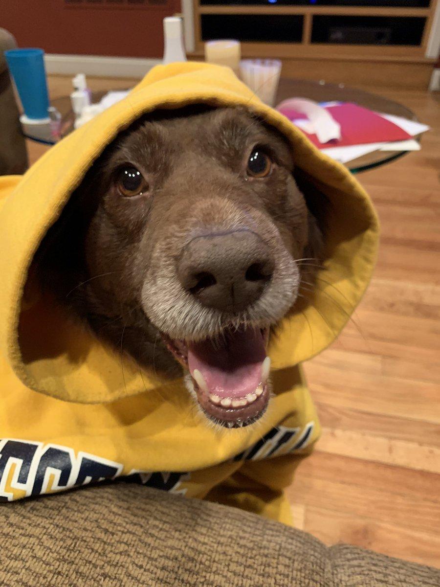 Baby it's cold inside! . #dogs #dogsoftwitter #dogslivesmatter #rescuedog Hope