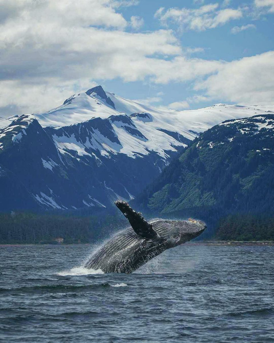 Summit Sundays... with a twist! 🐋⛰️  📸: @marysmark  📍 Juneau, Alaska  #sacompany #sateam #sanation #adventure #outdoors #alaska #whale #travel #whalewatching #wildlifephotography #photography #landscape #photooftheday #instagood #love #travelgram #colors #nature #summit