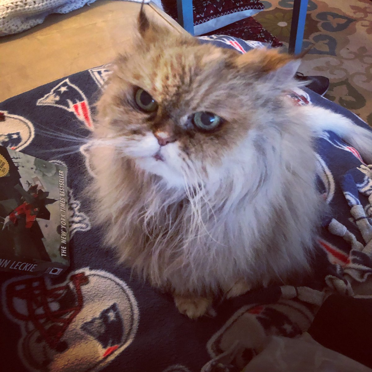There's some disagreement in this @Patriots house about whether or not @TomBrady is a traitor (I say YES hubby says NO). Pretty sure she agrees with ME! #NFLPlayoffs #SuperBowl #TomBrady #TampaBaybucs