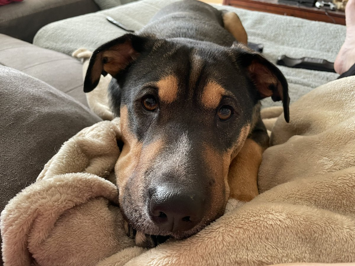 Mommy, will you tell me the story about how you adopted me again? #dogs #sundaymornings #rescuedog #heinz57dog