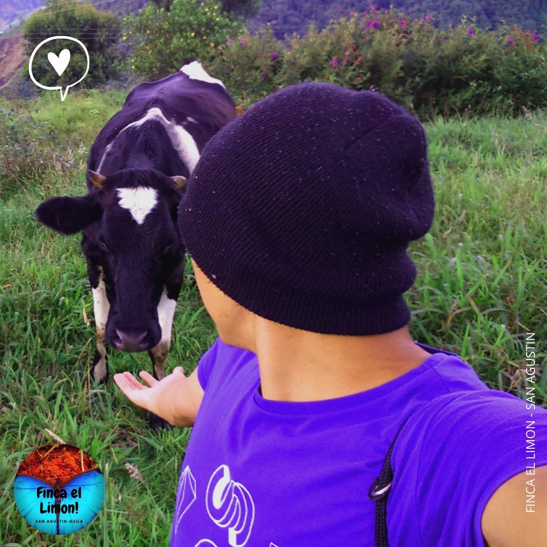 #farmlife #fincalemon #happyfarmily #countryliving #countrylife #farm #lifeinthecountry #lovecountrylifestyle #happylife #lifeouthere #hobbyfarmgram #naturelovers #adventureculture #meadow #Colombia #huila #garzon #cow #calf #animals #vacas #care #cowsofinstagram #cows #cowboy https://t.co/XDGy1Aputw