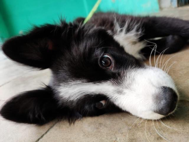 Say woof to Happy ❤️👉🐕  #dog #saywoof #doglovers #dogs #happy #happydog #puppy (Ig:happy.doggo.06)