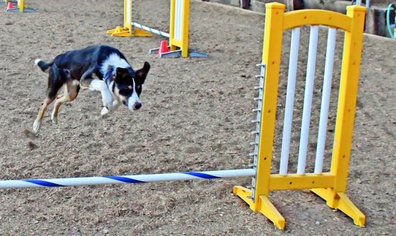 Why Dog Agility is an Awesome Sport for You and Your Dog -  #sport #dog #agility