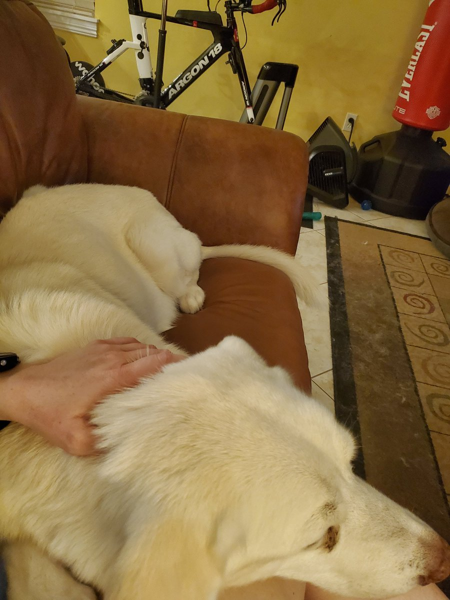 My big, old man wanted lap time, so my kids and I helped him onto the couch💕 #seniordogs #rescuedog #dogsoftwitter