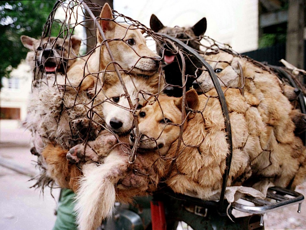 Would you please say a word against the #DogMeatTrade?  #AskHunter