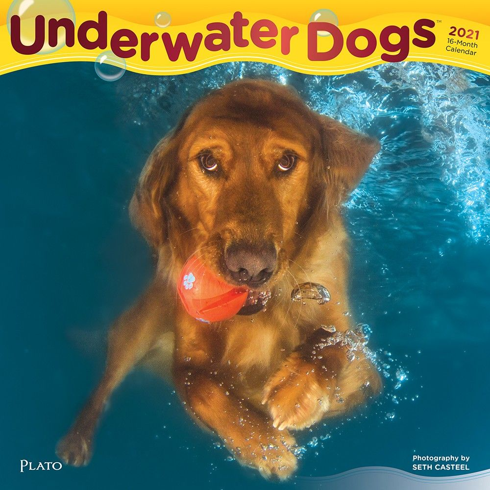 Whether goofy, serene, or hilariously terrifying, Seth Casteel's remarkable photographs of #dogs playing #underwater reveal a side to their eyelids, gums, and tongues that one could never have seen on dry land. #UnderwaterDogs #pets #canine #humor