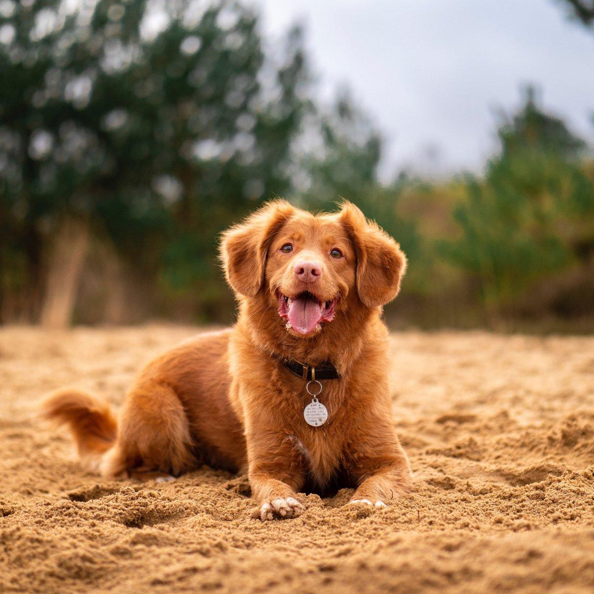 Morning ❤️🤗  #dogsofinstagram #dogs_of_instagram #doglover #doglife #instapup #dogstagram #doglove #dogsarefamily #dogfriends #dogsoftheday #dog #dogs #dogoftheday #instadog #puppy #doglovers #ilovemydog #dogsofinsta #pet #puppylove #doggy #puppies #cute #dogsofig #doggo #pe