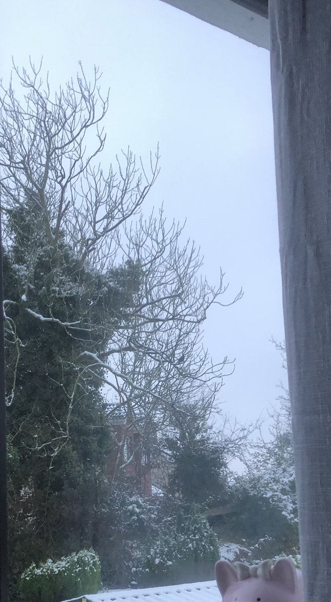 Here is my snowy tree outside my writing window (bedroom) and I think it is trying to get in from the cold. But it's Baltic inside too. #MondayVibes #mondaythoughts #amwriting
