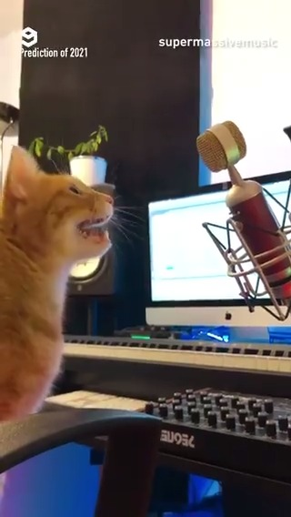 This is gonna be meow year 😼 📹 supermassivemusic | IG