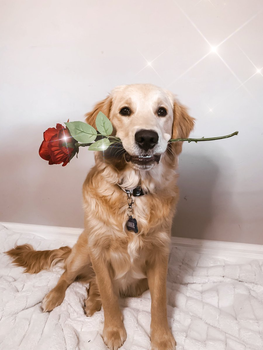 Hey @chrisbharrison, do you think Rookie would be a good contestant for the next bachelorette?! He's a real ladies man!!! 🤣🌹 #bachelor #BachelorNation
