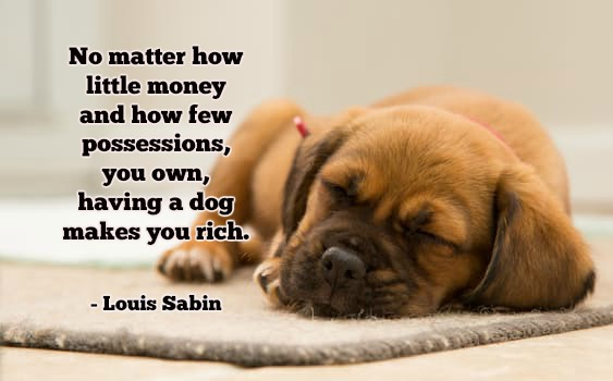 No Matter how little money and how few possessions, you own, having a dog makes you rich.-Louis Sabin #quote