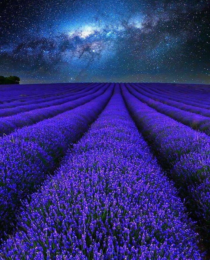 Beautiful Blue 💜💜💜