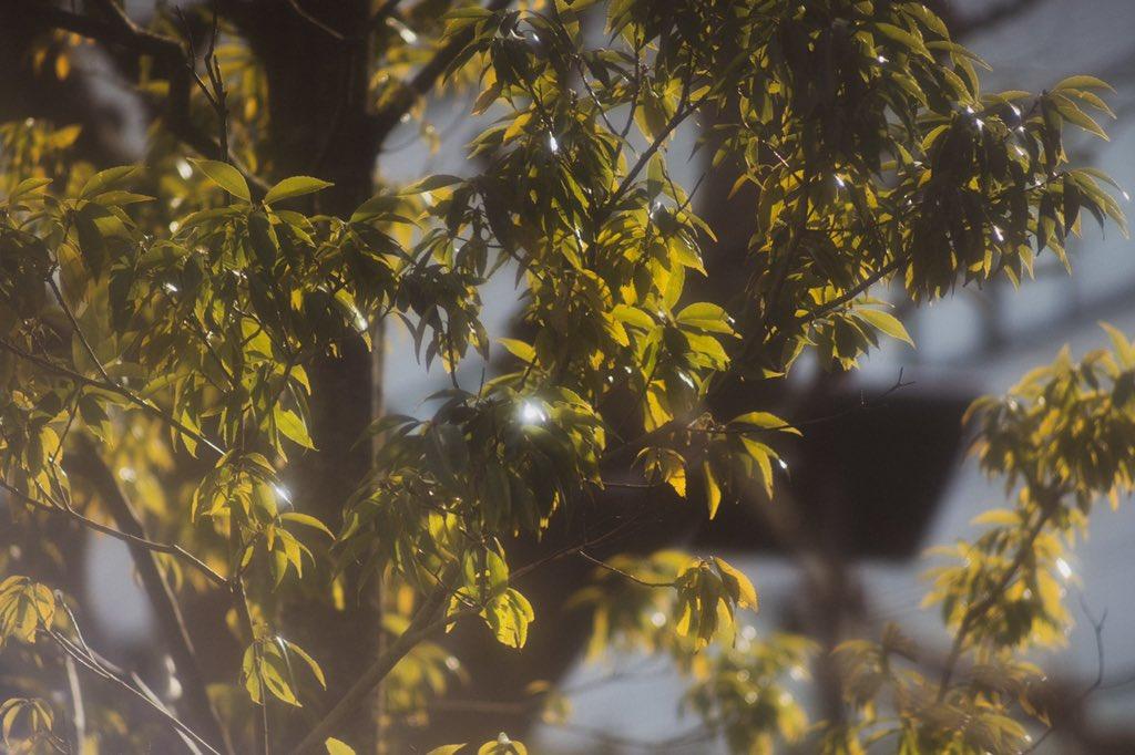 Meyer-Optik Görlitz Orestor 135mm f/2.8 柔らかいけどフォーカスがキマるとパキる!レンズのlookも生っぽさがない!ボケモンスターなのは言うまでもなし!  #ポートレート #写真好きな人と繋がりたい #sunset #撮影モデル #フィルム写真  #カメラ男子 #カメラのある生活 #フィルムカメラ #oldlens