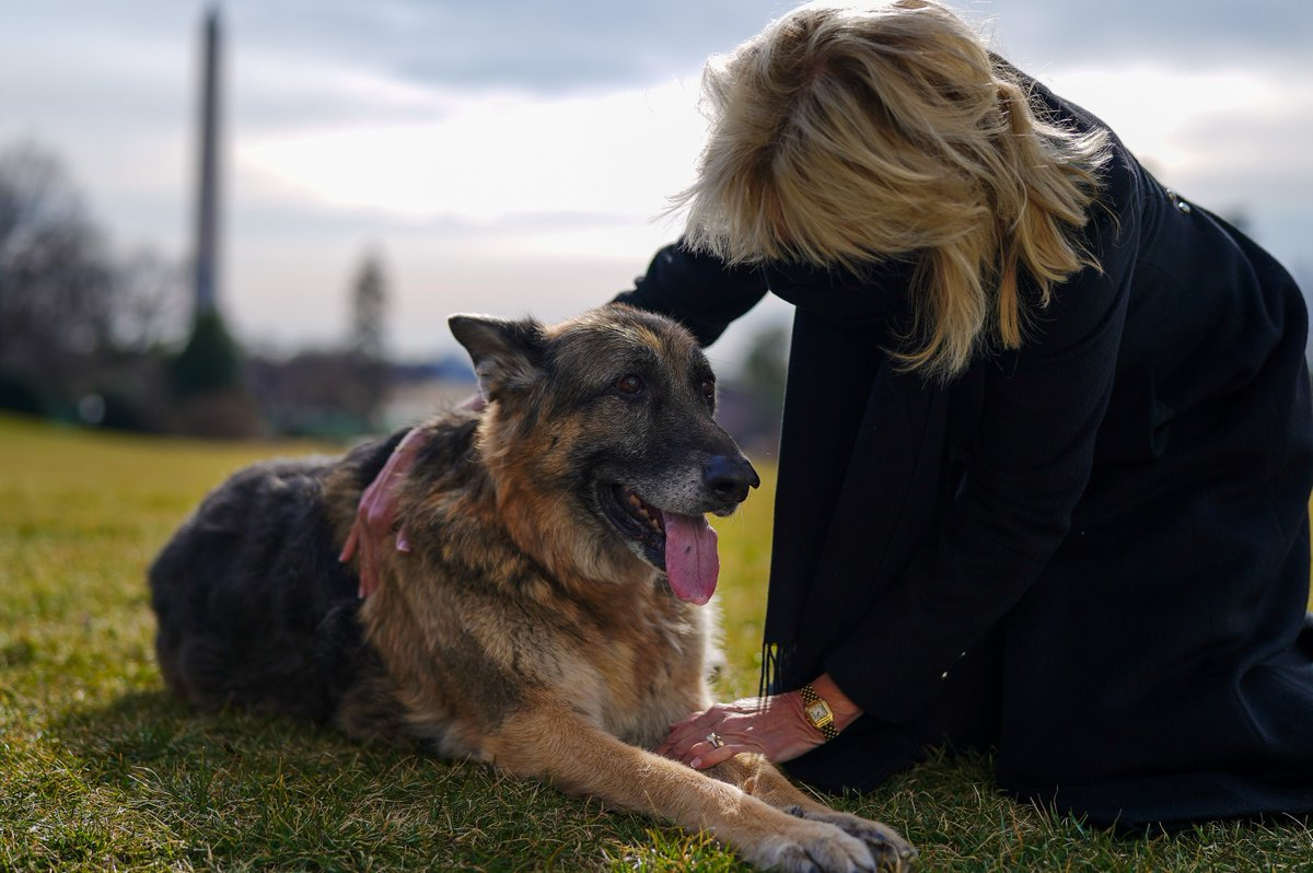 JUST IN: @POTUS & @FLOTUS's two German shepherds, Major and Champ, have moved into the White House. There has not been a pet in the WH since the Obamas departed four years ago; fmr. President Trump was the first in 100+ years not to have a pet in office. Pics by WH/Adam Schultz