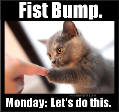 Monday? We've got this! 👊😻  #monday #mondays #positive #uplifting #fistbump #paw #cat #cats #letsdoit #together