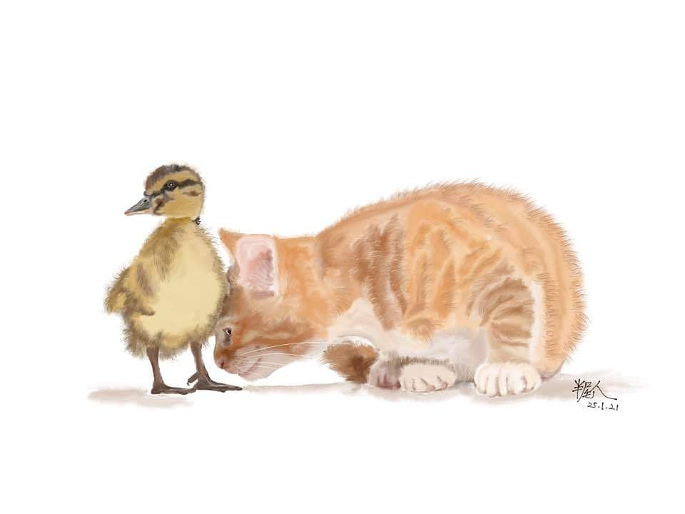You don't look like me, don't sound like me, you cannot be mine. #mco2 #signaturebestkopi #catstagram #cats #cat #catoftheday #catsofinstagram #catofinstagram #catlovers #duck #ducklings #digitaldrawing #digitalpainting #digitalillustration #digitalart #worldsbiggestdrawingclub
