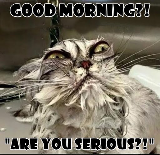 Good #MondayMorning! ...maybe not so much if you are living with bedbugs. Don't let them ruin another day.  Got #Bedbugs? It's time to #GetExtreme! Your bedbug solution.  #MondayMotivation