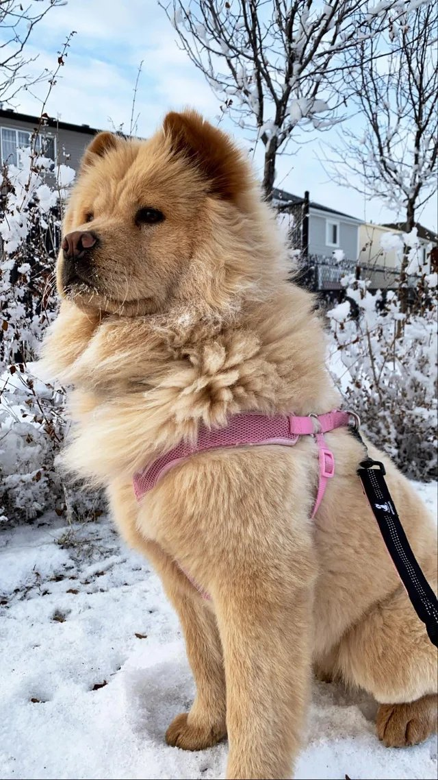 This pup enjoying her first of many cold Canadian winters!  #nature #naturelovers #wonderful #beautiful #naturephotography #natureperfection #photooftheday #photograpy #beautiful #world #naturelove #cute #sweet #Travel #innocence #animals