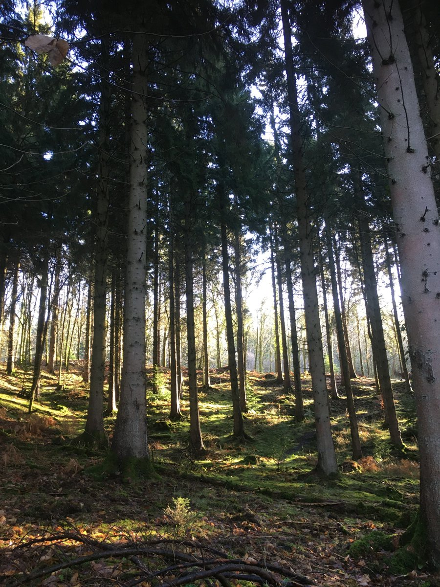 Forest of Dean Green Party   Motion Proposed for Forest of Dean District Council in support of the Climate & Ecology Emergency Bill      @FoDDC #ecology #ClimateAction #nature #ClimateCrisis #ForestofDean #GreenParty @GlosCC