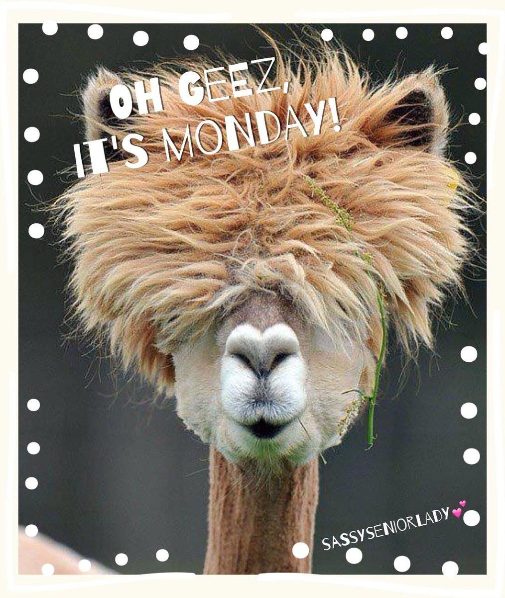 #goodmorning #MondayMorning #mondaymadness