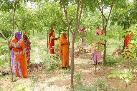 A village in #Rajasthan called as '#Piplantari' plants 111 #trees every time a baby #girl is born, in her honor. Native species are planted at various locations & which can be later utilized also. Started by Shyam Sundar Paliwal. Today he is awarded with PadmaShri.