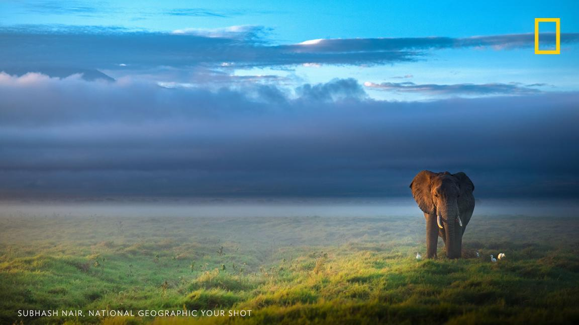 Your Shot photographer Subhash Nair spotted this African Elephant walking through the morning mist in Kenya's Amboseli National Park