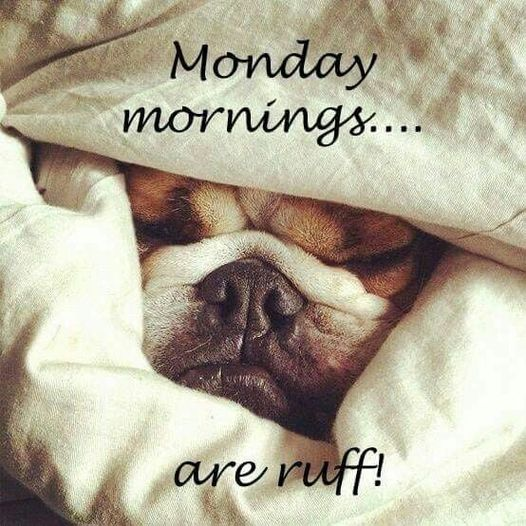 Happy Monday to all from Paws for the Caws  !!!!   #mondaymorning #dog #rescue #canada #cute
