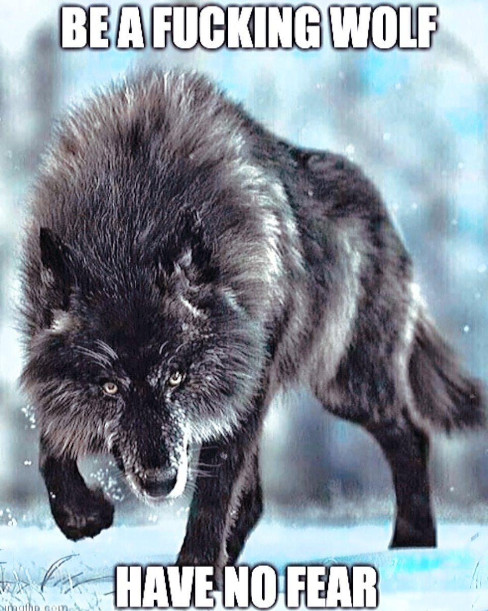 #MondayMotivation 💪 I AM A WOLF AND I AM STRONGER THAN FEAR 🐺🌕💘