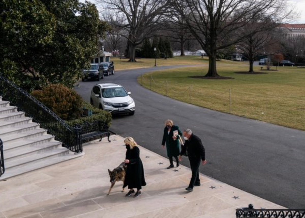 Crucial moment for most new administrations: Biden dogs, Major and Champ, both German Shepherds, arrived at White House yesterday: #SchultzWhiteHouse