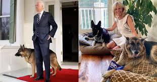Replying to @ReallyAmerican1: Champ and Major have a higher approval rating than the disgraced former president Trump.  FACT.