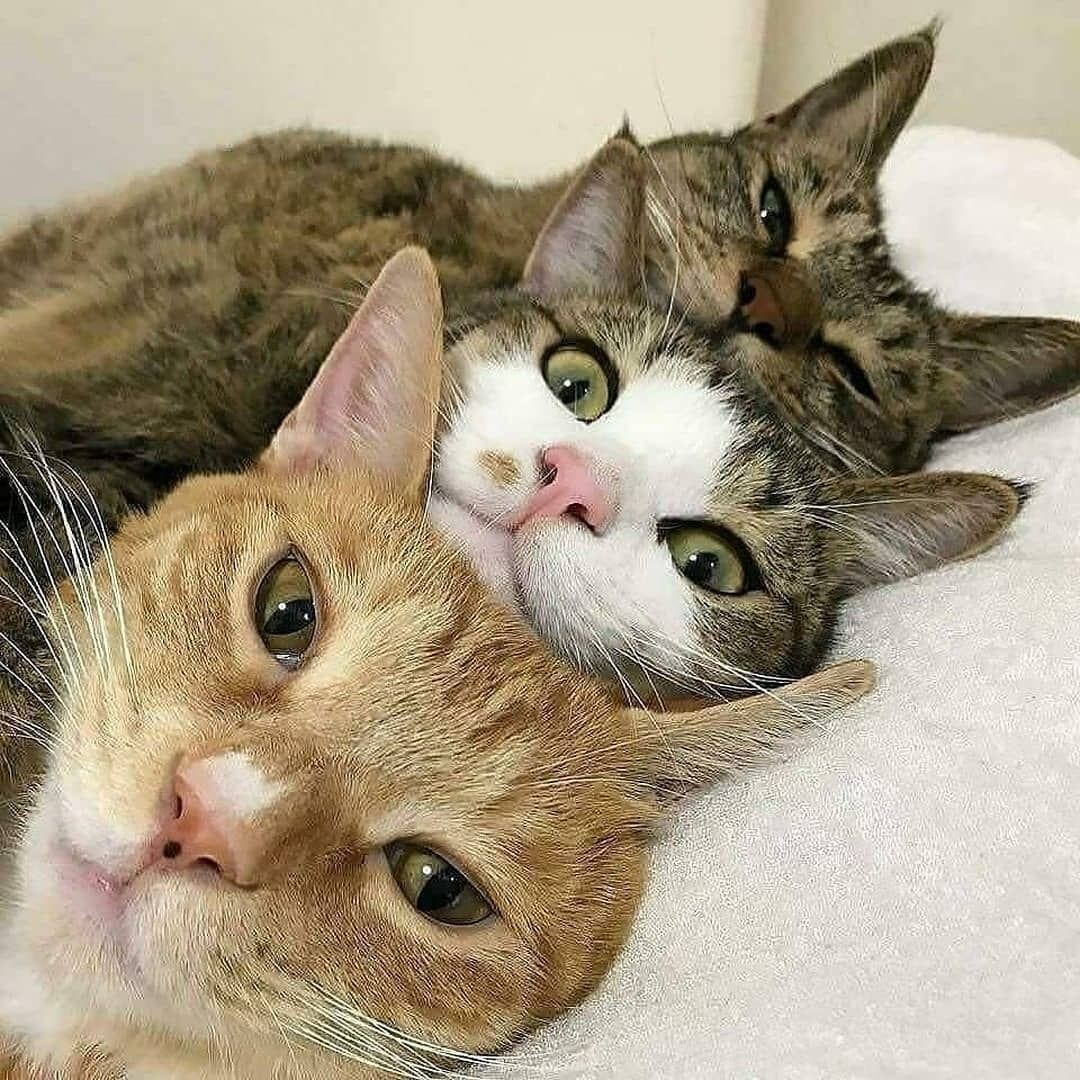 #Cats warm our hearts.🐱🐱🐱  #cats #catsofinstagram #catlovers  #MondayMotivation #Free4KTVPS5I