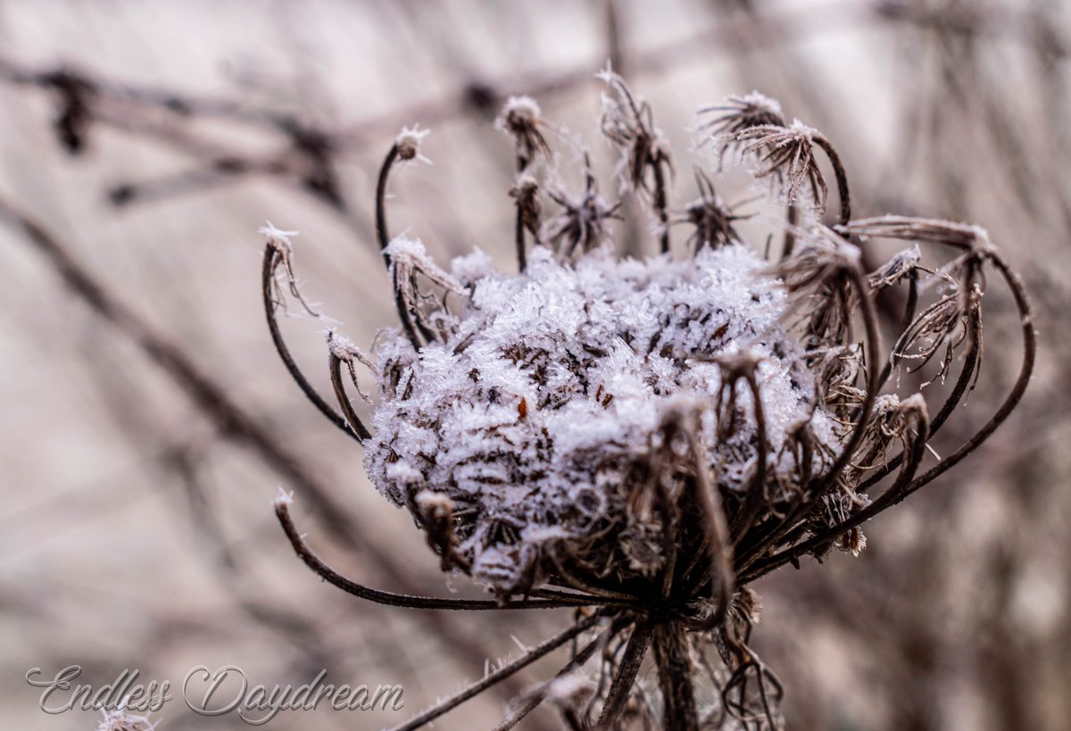 #ShareTheLove and your photos to brighten the day and support each other for #MacroMonday   Theme :  Fabulous Frost❄️   #photography #Theme #Fabulous #frost  #WINTER #PhotographyIsArt #nature #PositiveVibes #SpreadLove #MondayMotivation #MondayVibes #macrophotography #positivity