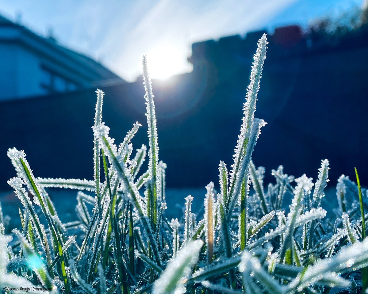 Morning sunlight hits the green grass after a frosty night in Westmeath, Ireland.  My entry to @RMetS #StormHour #POTW competition #Frosty #ThePhotoHour #SnowHour #photography