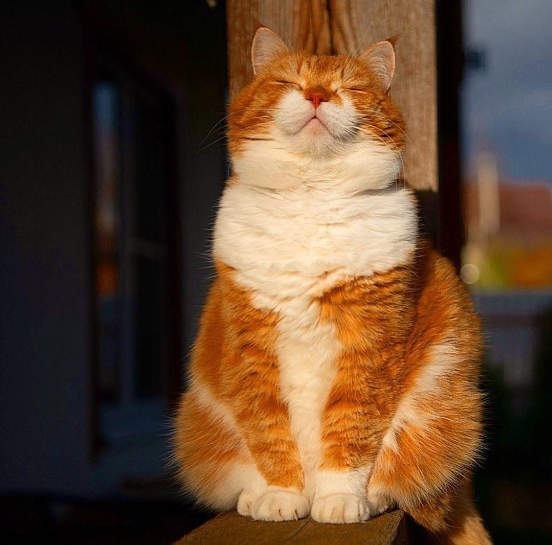 Inside every #Cat, Beats the Heart of a Lion.🐱🐱🐱  #cats #catsofinstagram #catlovers  #MondayMotivation #FREE4KTVPS5