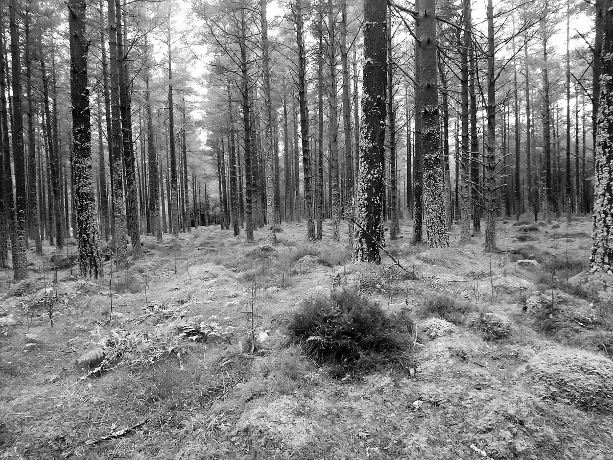Be glad to get back out fishing and travelling Scotland, until then here are some of our previous shots in black and white  DINNET FOREST  @SGH_RTs @BlazedRTs @sme_rt #animals #nature #ArtistOnTwitter #fishing #pictures #photography @ScrimFinder #camping #uk @AdventuresJocks