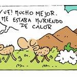 Image for the Tweet beginning: La #Bandurria del día #Jornada