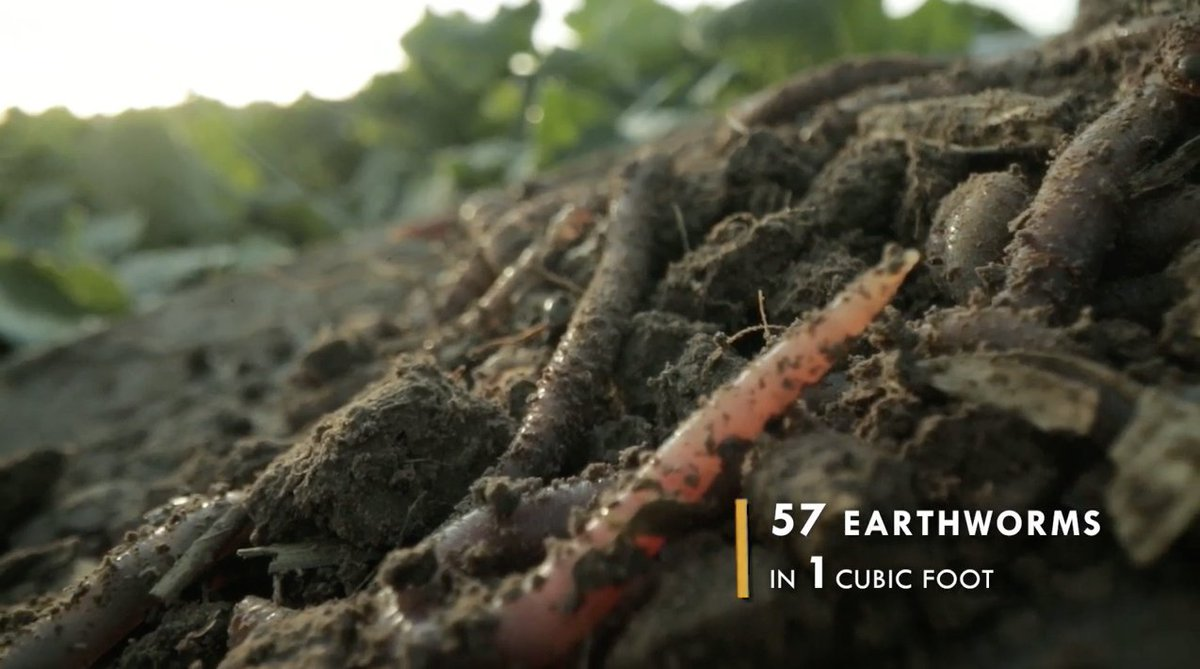 (Video) A look at what's possible with #SoilHealth from a test plot in southeast Idaho:  via @FarmsNews #AgChat #Soil #Agriculture
