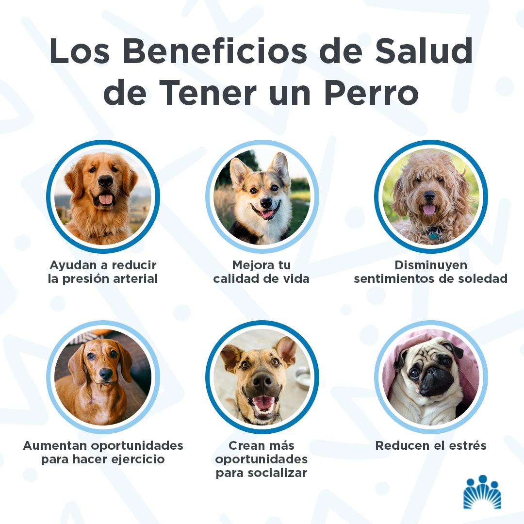 Son más que mascotas o perros de guía. Los perros son fieles amigos que dejan un impacto positivo a nuestra salud y bienestar. https://t.co/lCma4xsSsF  (enlace en inglés) https://t.co/oHHOWvYyjg