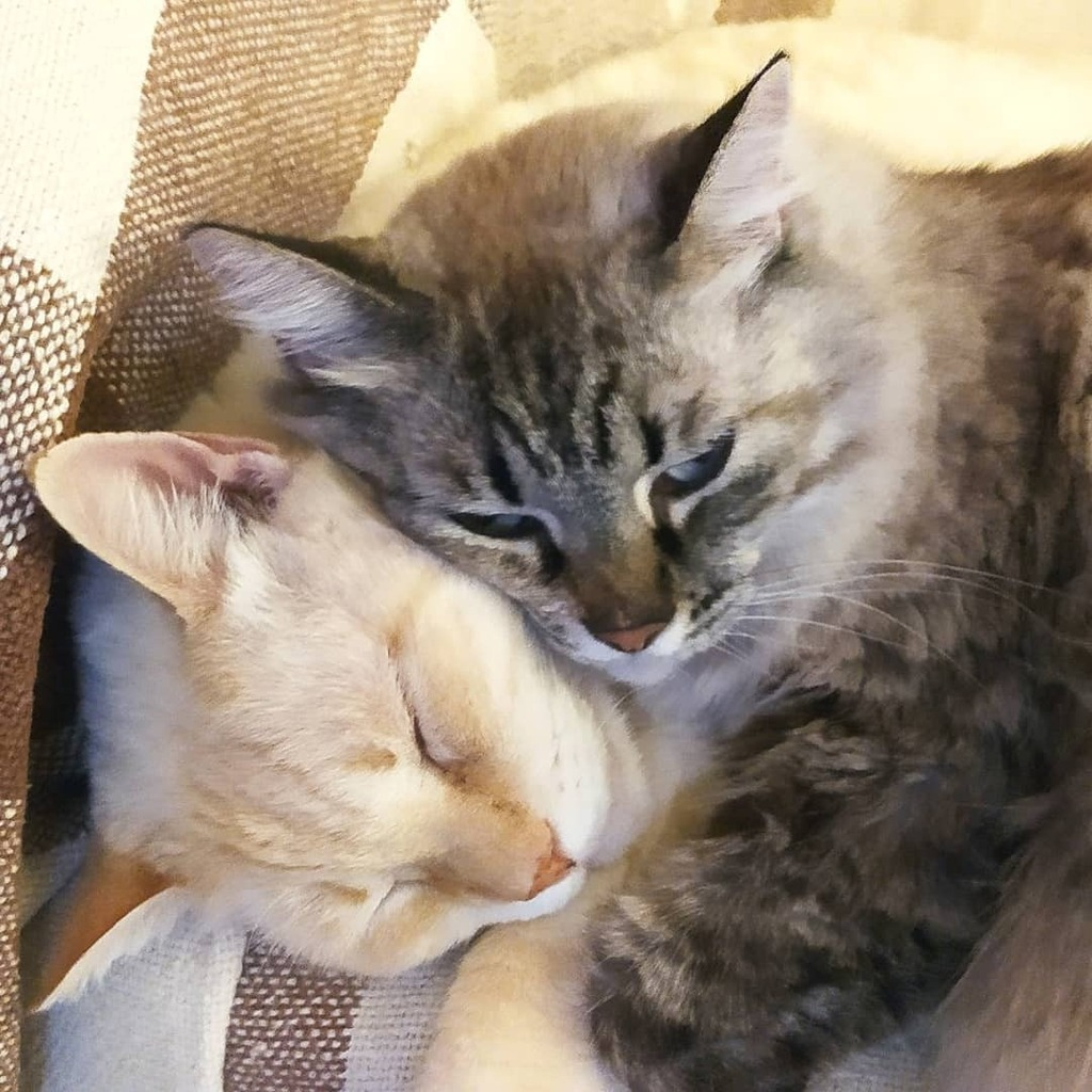 He's my bro!   #autohash #Torrevieja #Spain #ComunidadValenciana #cute #cat #ilovemycat #catsagram #catstagram #kitten #animal #nature #little #mammal #kitten #portrait #pet #young #petsofinstagram #pets #petstagram #eye #sleep #grey