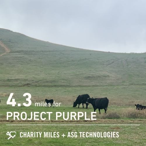 4.3 @CharityMiles! For @Run4Purple #EveryMileMatters #CharityMiles #PancreaticCancer #ProjectPurple #FiftyFans
