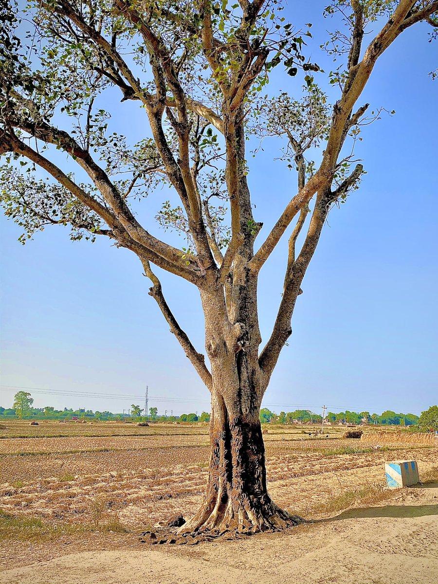 কোনোএক নাম না জানা #দিগন্ত #TravelTheWorld #Traveller #travelcorridor #Murshidabad #beautiful #Bengalis #best #beautifulworld #GoGreen #green #greeny #greenindiachallenge #NaturalBeauty #Nature #NatureHeals #NaturePhotography #ThoughtfulIsBeautiful #PicOfTheDay #PlantPower #tree