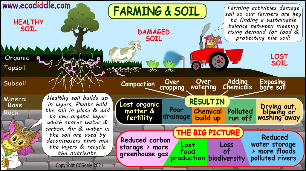 #Sustainable #farming need healthy #soil  Today we see the challenges, tomorrow some solutions😃🪱🐝🌱🐄🚜  #Sustainability #climatechange #homeschooling #parents #ClimateAction #learning #edutwitter #environment #nature #savetheplanet #recycling #biodiversity #ecology #zerowaste