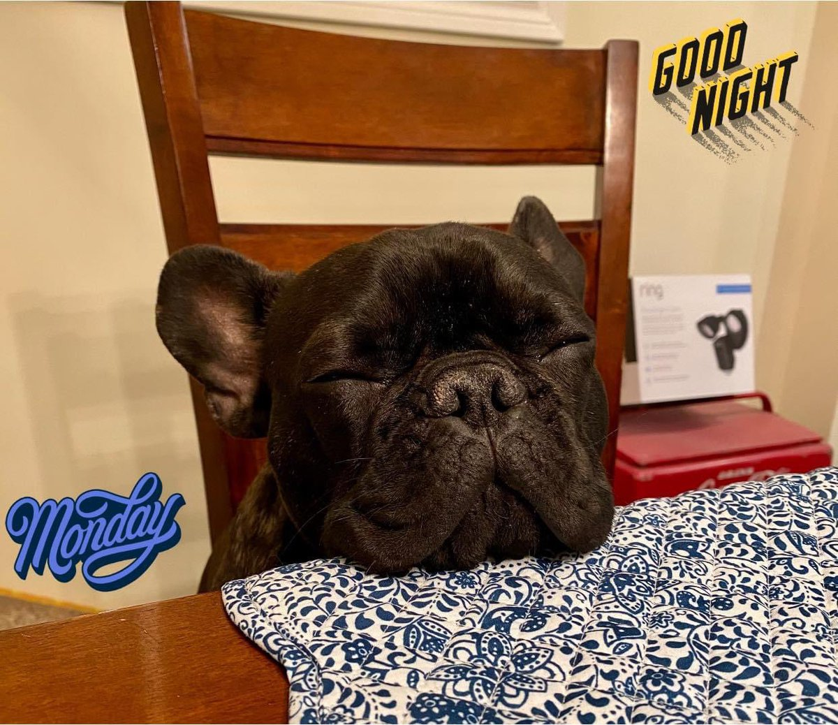 It's a textbook Monday when you're so TIRED you fall asleep with your head on the dinner table. 💤   #doggo #Sleepy #SleepyTime #dinner #monday #eyesclosed #puppy #frenchbulldog #frenchie #table #diner #ygk #ff #ifb #follow #DogsofTwittter #dog #dogs #blackdog #doggy #animals