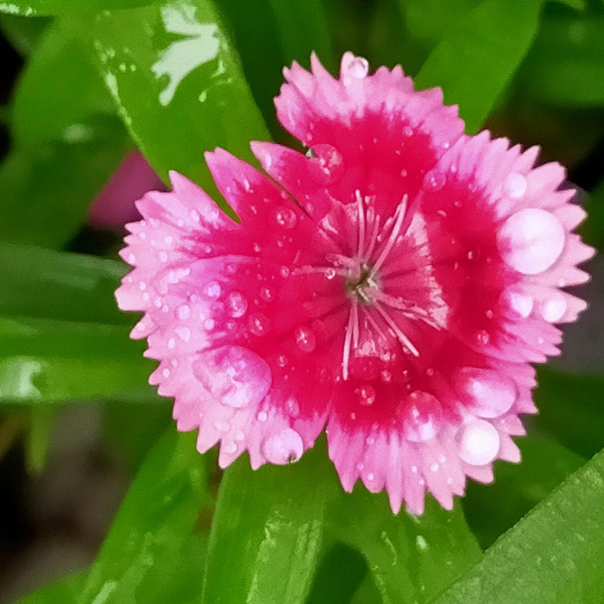 Colours my heart 💓 pink. Pink rain. 💓💓#mindfulness