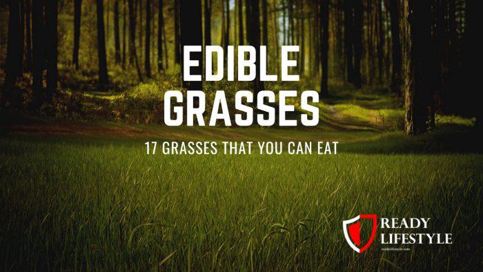 Edible Grasses: 17 Grasses That You Can Eat    #Grass #SHTF #Prepping #Grain
