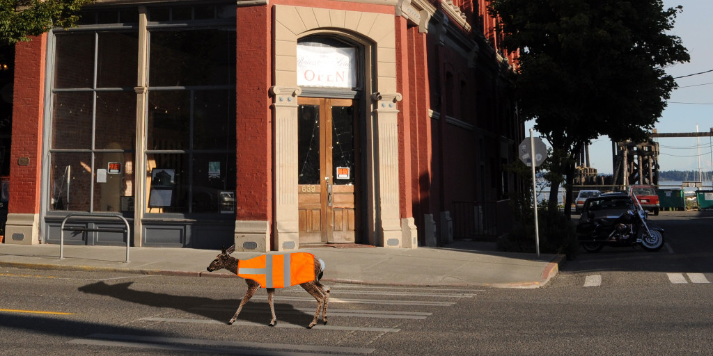 Port Townsend's Inner-City Deer Now Required to Wear Safety Vests https://t.co/uY1sKT5MLL