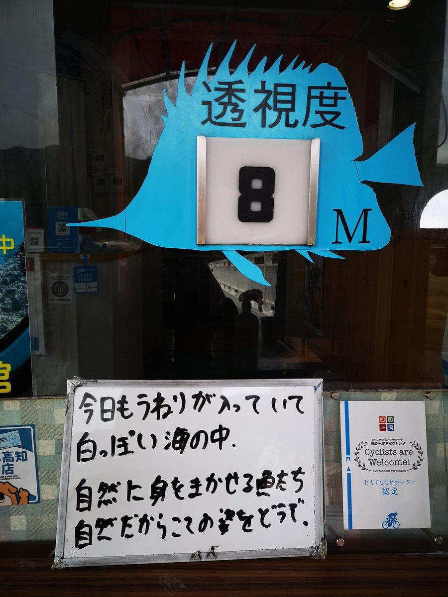 水族館とはまた違った剥き出しの野生を見る。  魚を見るじゃなくて海の中全てを見るのが足摺海底館だと思う。  リアルがここにある。  #足摺海底館 #天然ミュージアム #たつくしドラゴンブルー #スタッフ文野 #高知体験 #高知県 #土佐清水市 #竜串 #Travel #Japan #Kochi #tosashimizu #tatsukushi