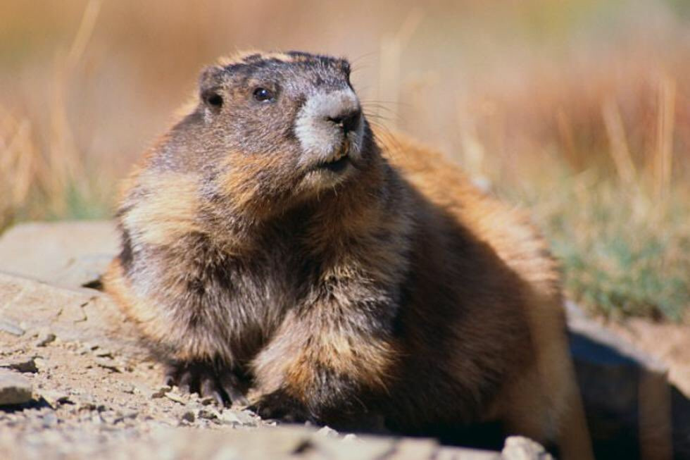 #IdBeTheFirstToPointOut how much wood a woodchuck would chuck if a woodchuck could chuck wood.