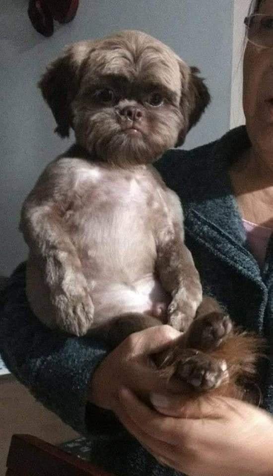cuando tienes cara de confundido jajajaja   #Dog #seriousselfie